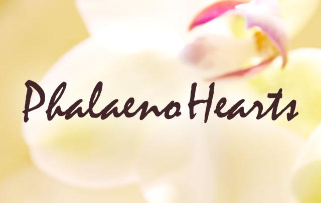法人様向け 胡蝶蘭専門ショッピングサイト Phalaeno Hearts